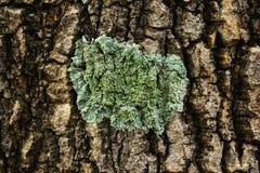 Lichen Image libre de droits
