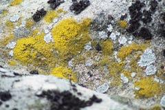 Lichen Stock Photography