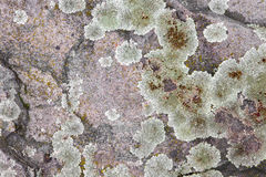 Lichen on the andesice rock Royalty Free Stock Images