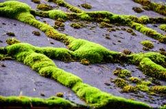 Lichen au-dessus de toit de maison Images libres de droits