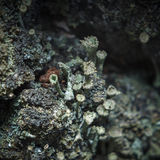 Lichen on the bark Stock Image