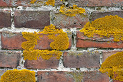 Lichen on brick wall Royalty Free Stock Images