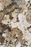 Lichen close up. Mixed growth of lichen viewed close up Stock Photos