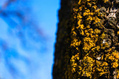 Lichen closeup Stock Photography