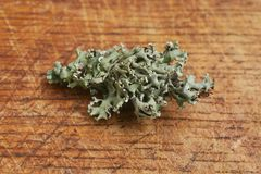 Lichen. Common piece of lichen on wood royalty free stock photos