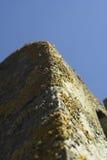 Lichen on concrete Stock Photos