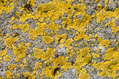 Lichen on Concrete Stock Images