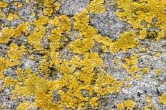 Lichen on Concrete Royalty Free Stock Photo