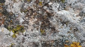 The lichen royalty free stock photography