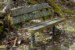 A lichen covered bench in the woods Royalty Free Stock Photography