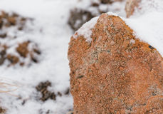 Lichen-covered dry stone wall in winter light Royalty Free Stock Photo