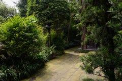 Lichen-covered path in verdant summer Stock Photos