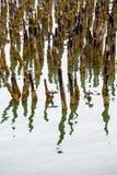 Lichen Covered Pilings dans le port photographie stock