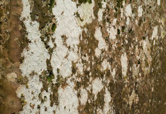 Lichen covered rock Royalty Free Stock Image