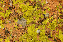 Lichen Covered Rock Stock Images