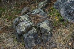 Lichen Covered Rock lungo Forest Floor immagini stock libere da diritti