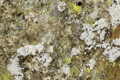 Lichen covered rock Royalty Free Stock Images