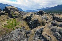 Lichen covered rocks in Nisga`a Memorial Lava Bed, British Columbia, Canada Stock Photos
