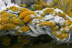 Lichen covered rope Royalty Free Stock Image