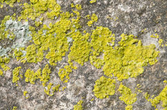 Lichen covered stone Royalty Free Stock Images