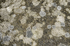 Lichen covered stone background texture Stock Photo