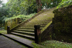 Lichen-covered stone steps in shady woods Stock Photography