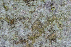 Lichen covered stone wall texture Stock Photography