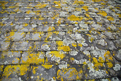 Lichen covered tiles on a cornish stone roof Stock Photography