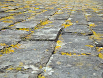 Lichen covered tiles on a cornish stone roof Royalty Free Stock Image