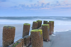Lichen Covered Wood Pilings auf Sandy Beach South Carolina lizenzfreie stockfotos
