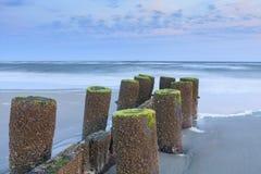 Lichen Covered Wood Pilings en Sandy Beach South Carolina Fotos de archivo libres de regalías
