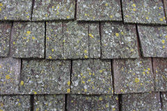 Lichen Covered Wood Shingles Fotografering för Bildbyråer