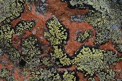 Lichen Crustose Photographie stock libre de droits
