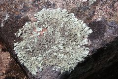 Background lichen at an old rock in details. Lichen in different colors at an old rock outdoors royalty free stock photography