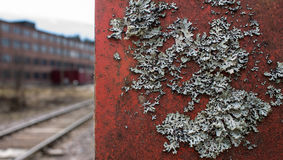 Lichen growing on metallic surface Stock Images