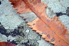 Lichen et feuille Photos libres de droits