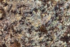 Lichen et mousse Images libres de droits