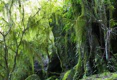 Lichen et mousse s'arrêtants Image stock