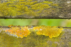 Lichen on fence Stock Photo