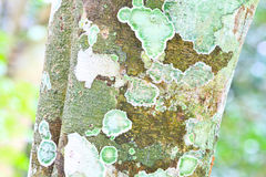 Lichen at a forest path Royalty Free Stock Photography
