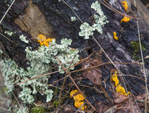 Lichen and fungi on rotting log Stock Photos