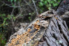 Lichen and Fungus Closeup on a Log royalty free stock image