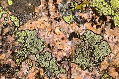 Lichen on granite rock Stock Photos