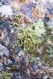 Lichen on granite rocks. Multicoloured stock image