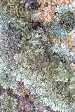 Lichen on granite rocks Royalty Free Stock Images