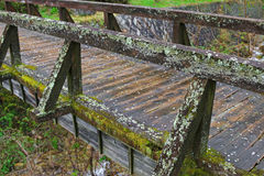 Lichen and green moss growing on weathered wooden bridge Stock Image