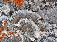 Lichen growing on rock Stock Photography