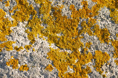 Lichen growing on rock face Royalty Free Stock Images