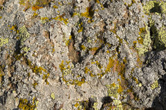 Lichen growing on rock Stock Photo