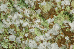Lichen growing on sandstone Stock Images
